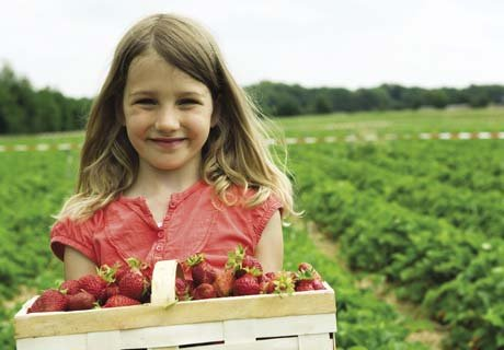 CSA girl with strawberries