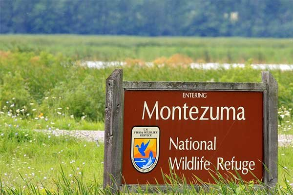 Montezuma Wildlife Refuge