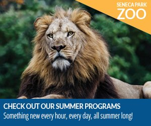 Seneca Park Zoo Summer Program