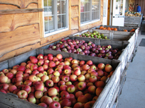 Apple bins at Lagoner FarmsJPG.png