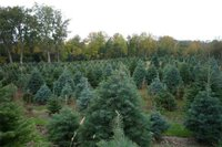 Darlings Tree Farm